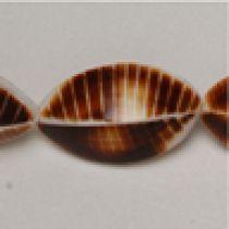 Brown cockle shell bottom App.16